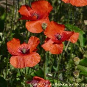 ricardgarcia-roselles