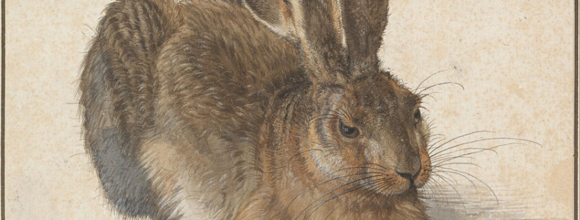 Albrecht_Dürer_-_Hare,_1502_-_Google_Art_Project_opt